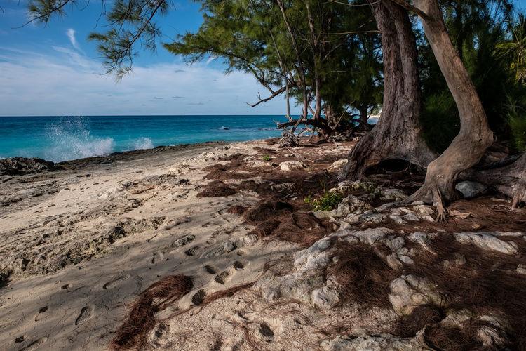 Rustic Hideaway Sea Water Tree Land Sky Beach Horizon Over Water Horizon Plant Scenics - Nature Nature Tranquility Beauty In Nature Tranquil Scene Tropical Climate Tree Trunk Trunk Sand No People Outdoors Bimini