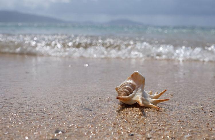 Japan Okinawa Ishigaki Island Ocean Beach Seashells Shells