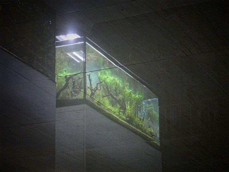 Off the floor Indoors  Backgrounds Reflection Aquarium Fish Tank Floor Perspective My Point Of View EyeEm Best Shots EyeEm Gallery AW130 Nikon Water FishEyeEm Abstract The Week On Eyem