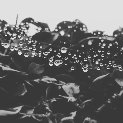 Getting Creative spider web trapped with rain drops