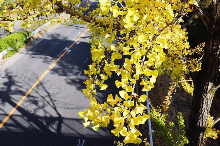 Plant Flower Sunlight Flowering Plant Yellow Nature Growth