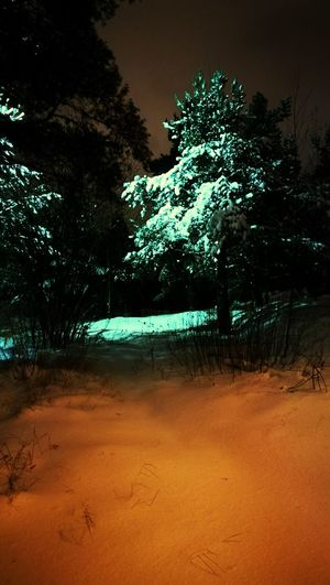 Tree Nature Outdoors No People Night Night Photography Frozen Nature November 2016 Light And Shadow Helsinki, Finland Frozen Cold Cold Weather