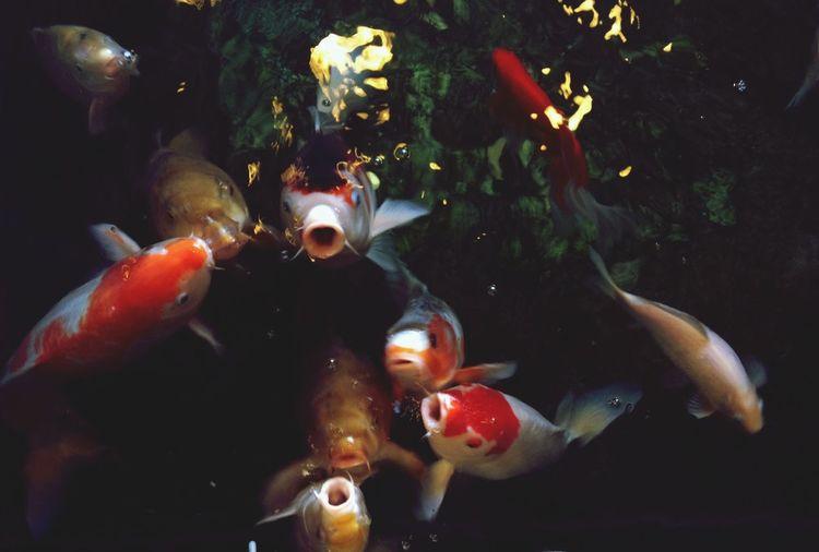 Fish Weird