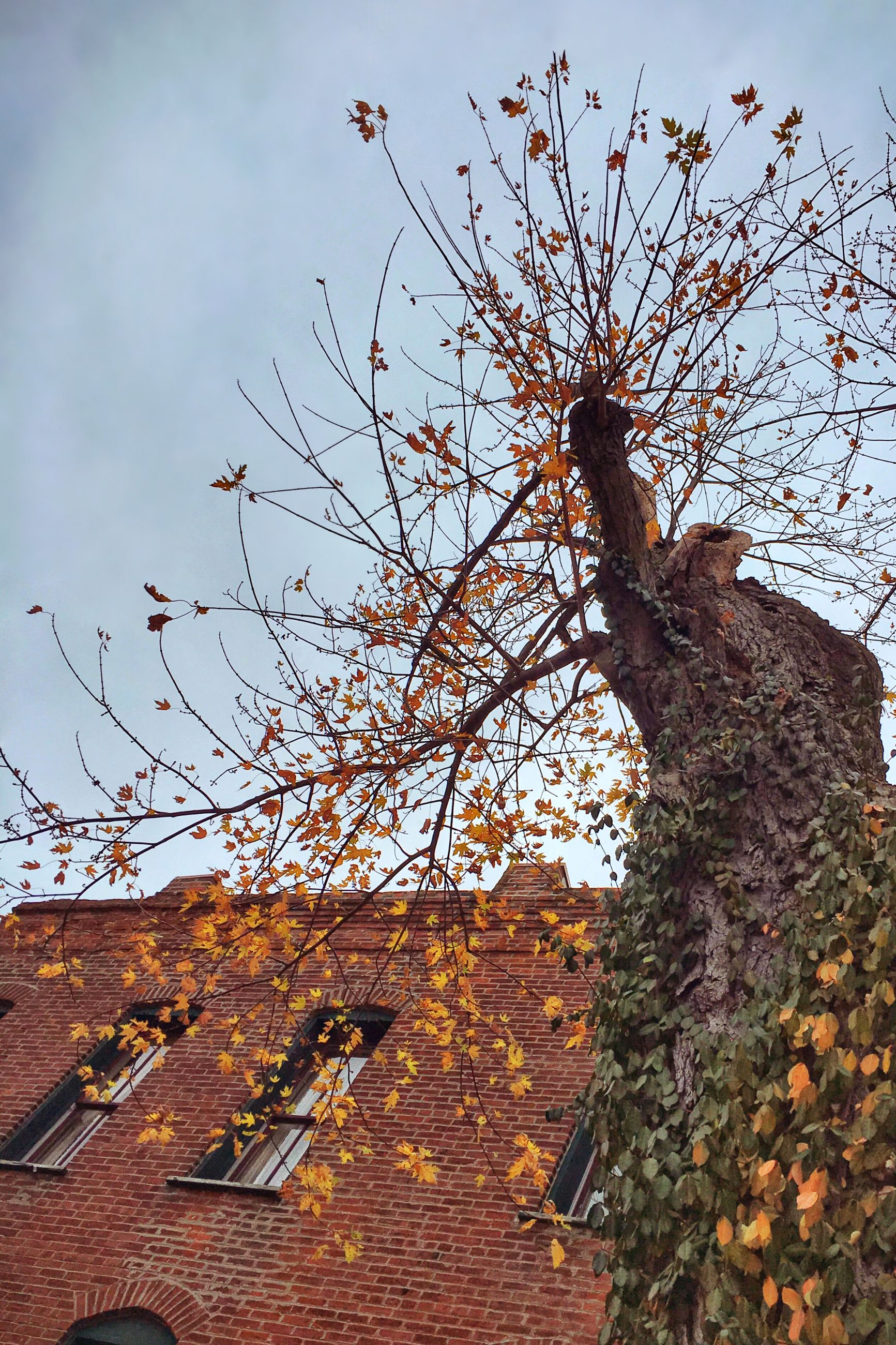 architecture, built structure, building exterior, low angle view, sky, house, brick wall, wall - building feature, tree, clear sky, abandoned, residential structure, old, stone wall, day, outdoors, branch, building, roof, no people