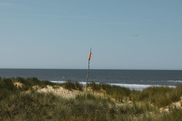Orange sign. Orange Sea Gull Beach Beachphotography Beauty In Nature Day Environment Flag Grass Horizon Horizon Over Water Land Marram Grass Nature No People Outdoors Patriotism Plant Scenics - Nature Sea Sky Tranquil Scene Tranquility Water Wind