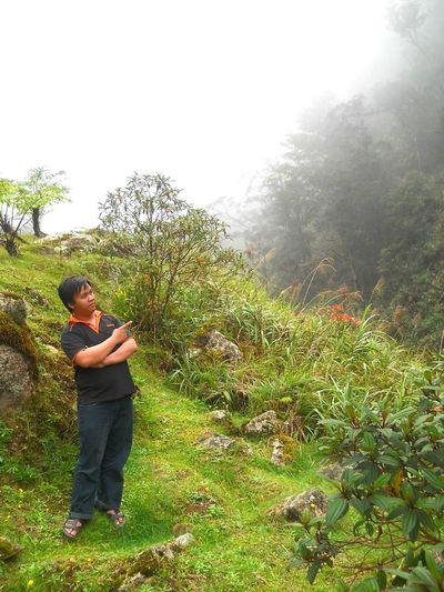 Mesilau Roadside Garden. Nature Garden Mist