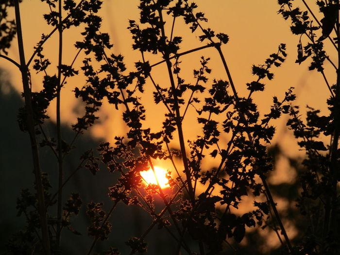 Sun sets First Eyeem Photo