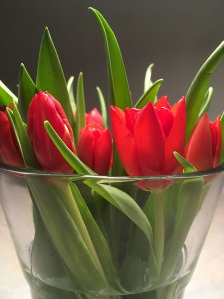 Spring Flowers Easter Flowers Bunch Of Tulips Bunch Of Flowers Tulips Flower Freshness Growth Beauty In Nature Nature Petal No People Green Color Fragility Red Flower Head Close-up Plant