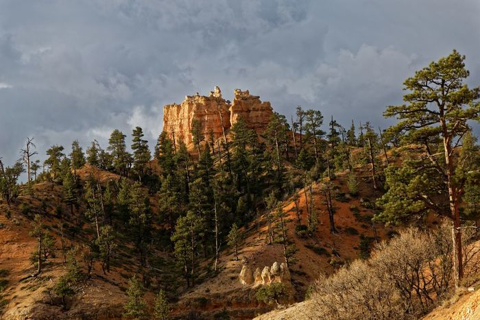Beauty In Nature Bryce Canyon Nat'l Park Cloud - Sky Day Landscape National Park Nature No People Outdoors Rock - Object Scenics Sky Travel Destinations Tree