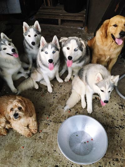 Pets Domestic Animals Animal Themes Dog Mammal Portrait Looking At Camera Day No People Indoors