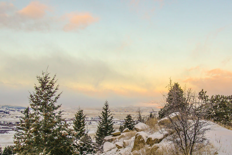 Sunrise Tree Pinaceae Pine Tree Pine Woodland Sunset Nature No People Winter Forest Sky Beauty In Nature Landscape Branch Snow Scenics Outdoors Cold Temperature Needle - Plant Part Christmas Tree Day Sunrisephotography