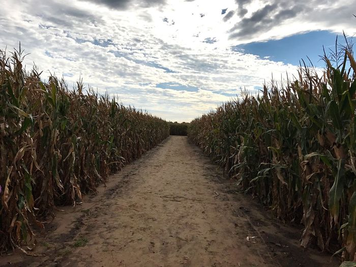 Narrow pathway amidst field against cloudy sky