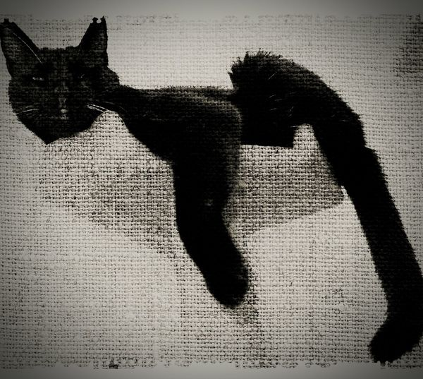 Black & White Relaxing Monochrome I Love Cats Animals🐾 Cats