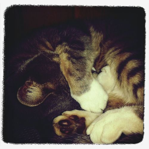 Sweet sleep . . . ( ^_^)