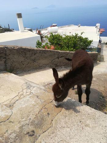 Sicilia..my new friend in Ginostra, Stromboli Sicily Beach Sand Shadow Sky Architecture Donkey Exterior