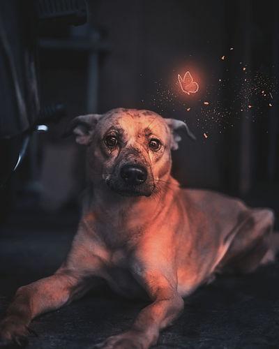 Sad Dog Pets
