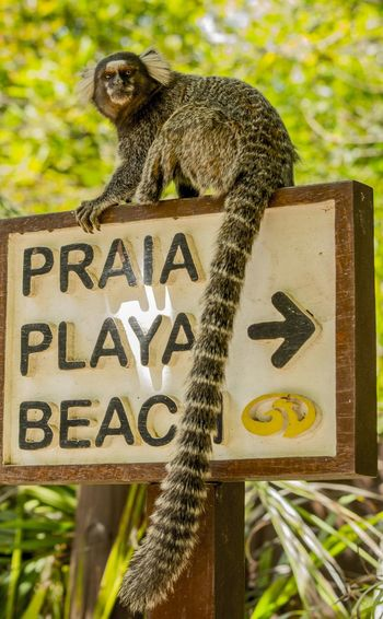 The sign of the monkey Monkey Monkeys Sign Beach Praia Playa Photo Photography Pic Picture Composition Animal Mammal Nature Nature Photography Communication Guidance Capital Letter Close-up