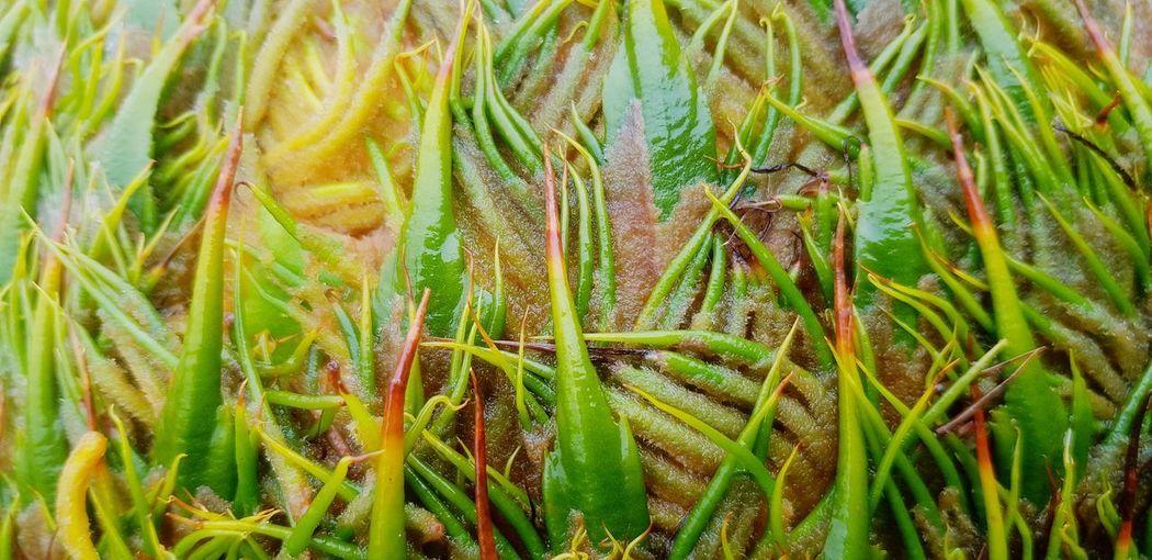 Full frame shot of fresh green grass