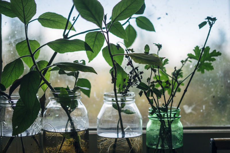 Beauty In Nature Cuttings Day Freshness Green Color Growth Leaf Nature No People Outdoors Plant Propagation Rainy Days Reflection Tree Water Wet Rural Poetry