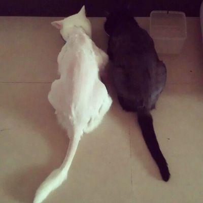 My hairy kids. Cat 貓 Blackandwhite Myhairykid