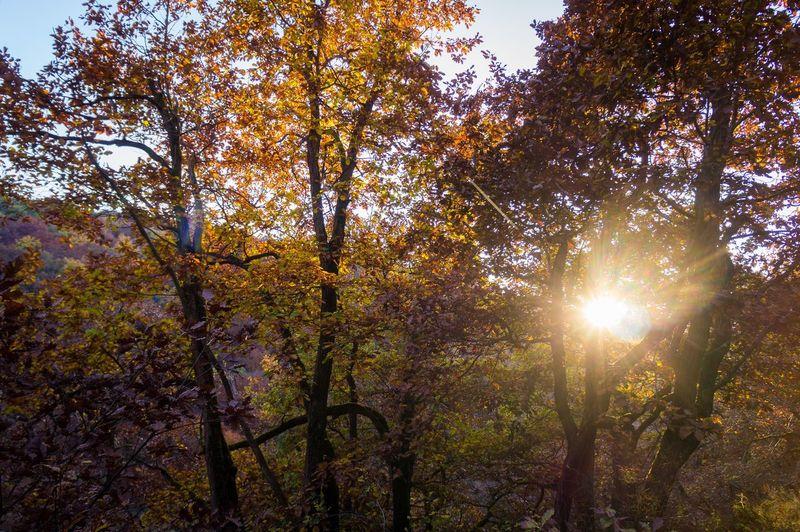 Autumn Autumn Colors Fall Beauty Growing Light Mystery Outdoors Sunny Tree Trunk
