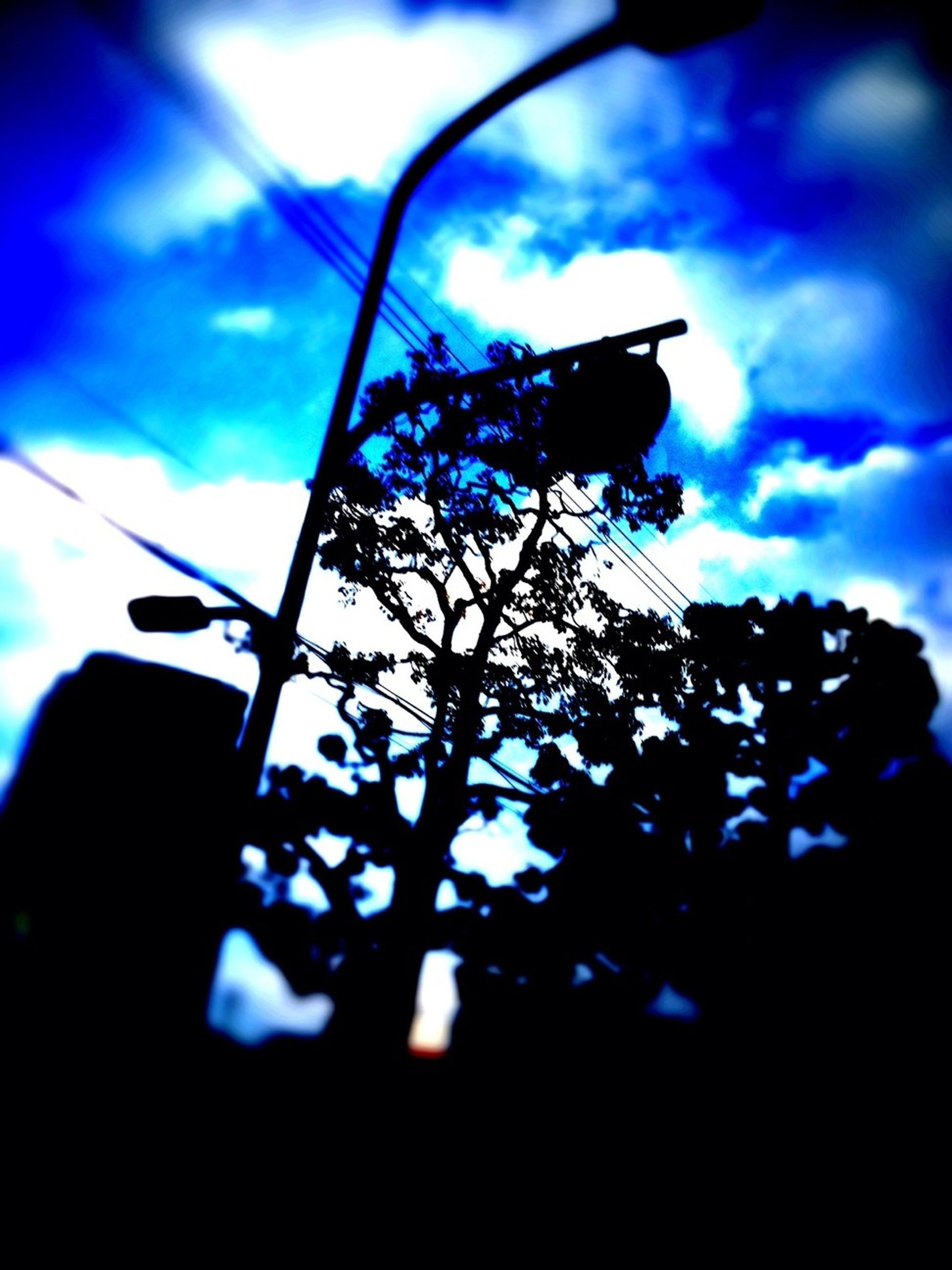 low angle view, sky, blue, silhouette, street light, lighting equipment, sunlight, growth, cloud - sky, day, no people, focus on foreground, nature, outdoors, built structure, close-up, cloud, tree, dusk, branch
