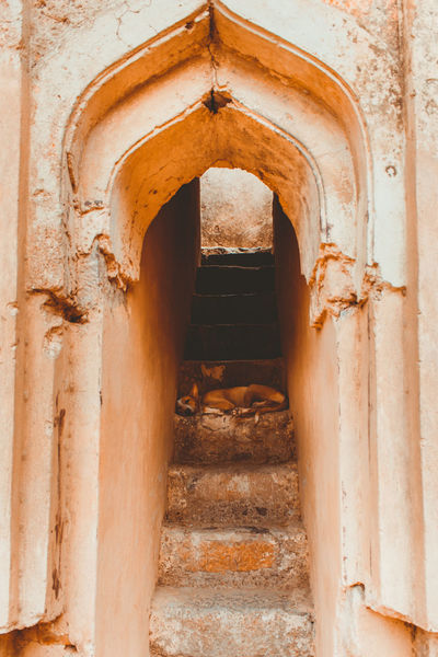 Archeology Mughal EyeEm Selects India Old Delhi Delhi Historical Place Historical Monuments History Through The Lens  Dog Sleeping Dog Golden Dog Stray Dog Stray Animal Stairs Vertical Vertical Composition Arch Entrance Architecture Built Structure Historic Ancient History Old Ruin The Past Historic Building