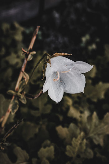Close-up of wilted flower plant