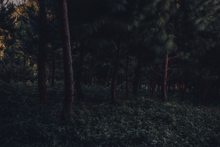 into the woods Forest Forest Photography Beginnerphotographer Woods Outdoors Beauty In Nature Philippines Horror Filter Blackboard  Backgrounds Textured  Black Color Full Frame Textile Tree Close-up Grunge EyeEmNewHere