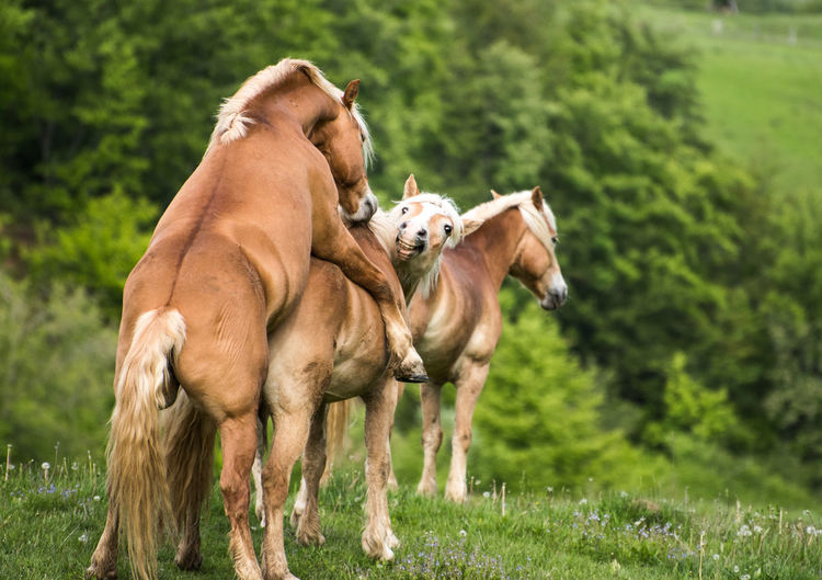 horse Animal Themes Day Domestic Animals Grass Green Color Livestock Mammal Nature No People Outdoors Tree