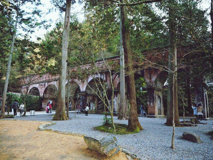 Nanzenji, kyoto Tree Architecture Built Structure Outdoors Day Nature Growth City No People Japan Kyoto Trip Nanzen-ji