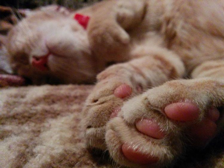 Kitty Cat♡ Sleeping Sleeping Cat Cute Pet Photography  Sleaping Kitty Cat Beauty Friends♡♡ Dreaming Furry Friends