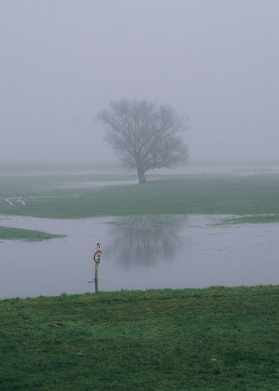 Tree growing on wetland during foggy weather