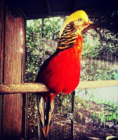 Bird One Animal Animal Themes Animals In The Wild Perching No People Multi Colored Cage Animal Wildlife Red Day Close-up Nature Indoors  Beauty In Nature Tree Macaw