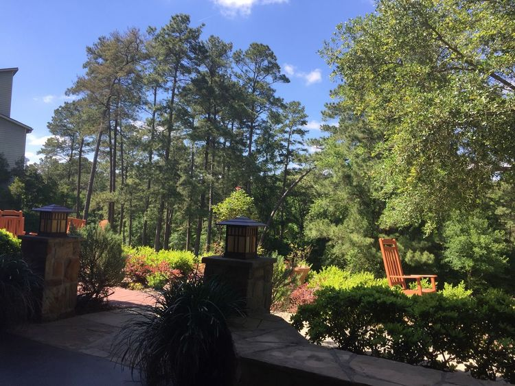 Green Patio Perfect Weather Relaxing Spring Day Blue Clouds Pine Trees Against The Sky Veranda