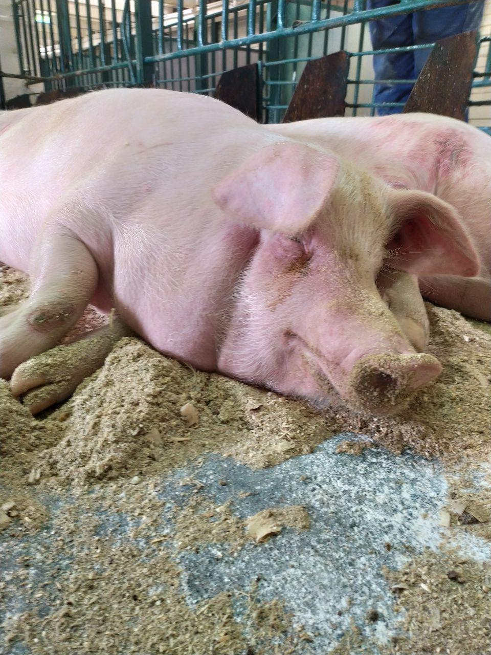 CLOSE-UP OF ANIMAL SLEEPING ON CARPET