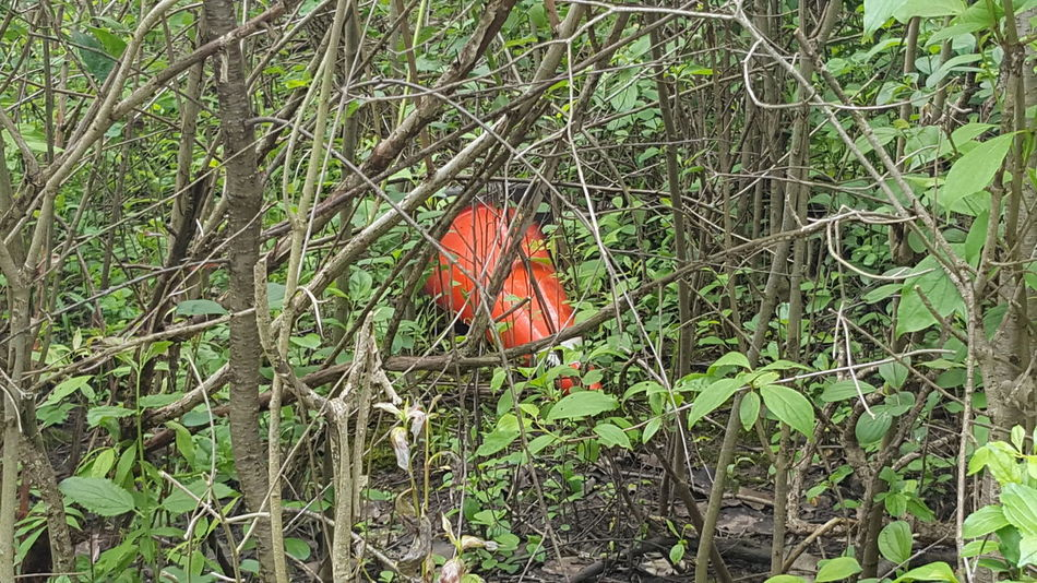 Pylon in a bush. How strange! Nature Forest Outdoors Trees Pylon Weird Nature Pylonography Bushes And Trees Bush Bushes How Did It Get There Red Green Red And Green Red Green Nature Color Background Walk In The Woods Forest Photography Pylon In A Bush