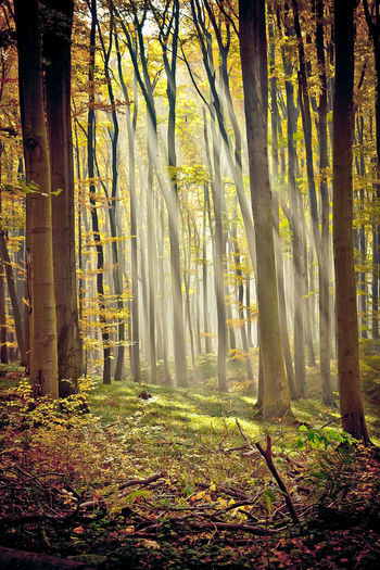 Autumn in Male Karpaty Slovakia Landscape Autumn🍁🍁🍁 Autumn Colors Autumn Trees Forest Forest Photography Little Carpatians Male Karpaty Nature Nature Photography