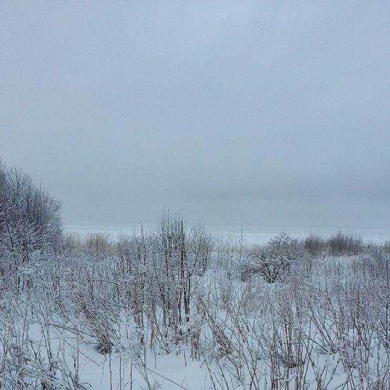 Dimmig vintermorgon vid havet Dogwalk Aln ö Strandpromenaden