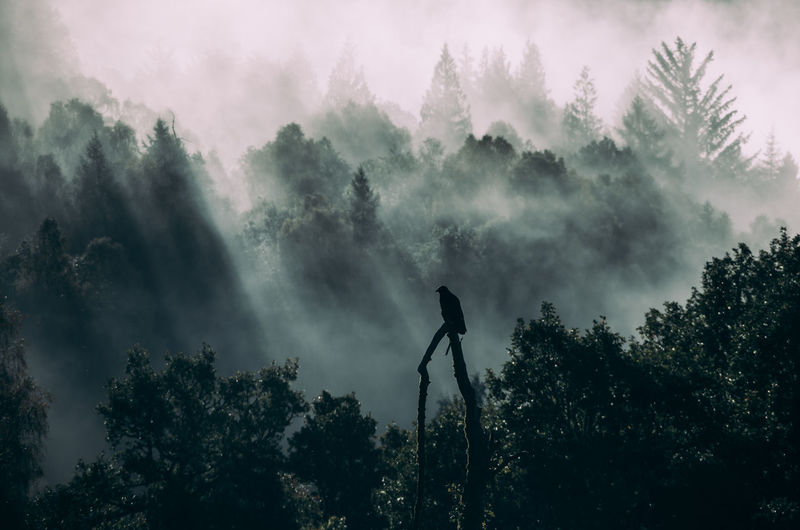 High angle view of bird perching on branch against atmospheric forest