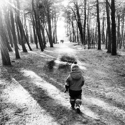 ❤ Metutis Forest Baltijosjura