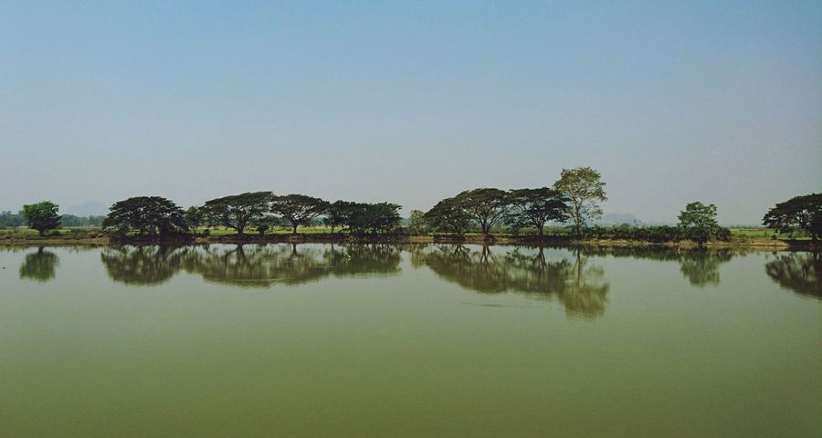 Amazing Reflection on water. Water Reflections Waterscape Plants Reflections In The Water Reflecting Silvia In Myanmar Burma