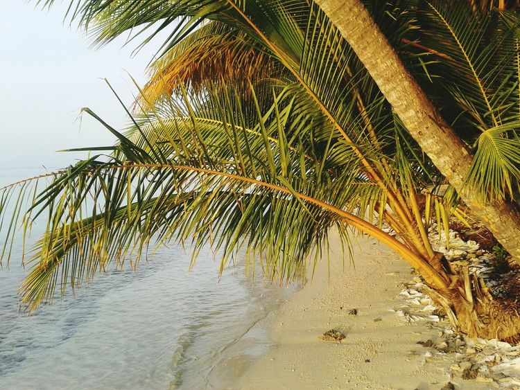 Vilamenhoo Island, Maldives Natural Beauty! Tropical Paradise Sunset Beautiful Surroundings Palm Trees Tropical Plants Beach Sand Nature Water Tranquil Scene Tranquility Sea No People Beauty In Nature Palm Tree Scenics Outdoors Tree Sky Day