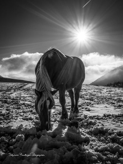 Beauty In Nature Cenise Cheval Blanc Horse Horse Photography  Mountain Nature Plateau De Cenise` Sun Sunlight