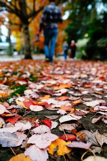 Autumn leaves fallen on street