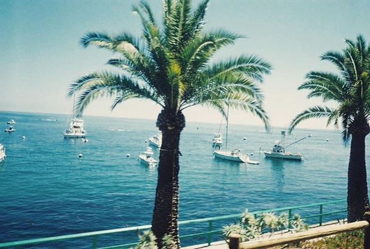 I'll be back, Catalina. I remember, three years ago, it was sad walking down toward the docked boat, knowing I'm walking past multiple palm trees as I load up for the boat. 🌴🌴🌴🌴☀🌊😭😭 CatalinaIsland Palmtrees Boat Boats Water Ocean Sea Clearsky Sky Trees Tree Nostalgia Cuesadmusic Sad Memory Comingback Sunnydays Island Travel Traveler Traveling Vacation Vacations Beach Waters fun adventure