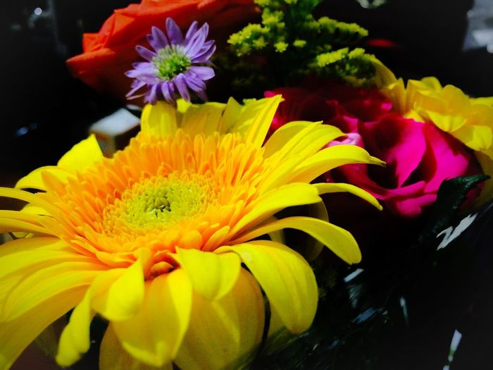 Yellow Flower Orange Flower Yellow Color Fllowers Lovers Flower Collection Taking Photos Hello World