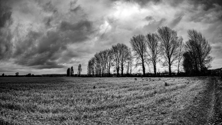 Field Sky Tree Landscape Nature Tranquility Cloud - Sky Beauty In Nature Tranquil Scene Scenics Day Bare Tree Outdoors Growth Agriculture No People Grass Rural Scene