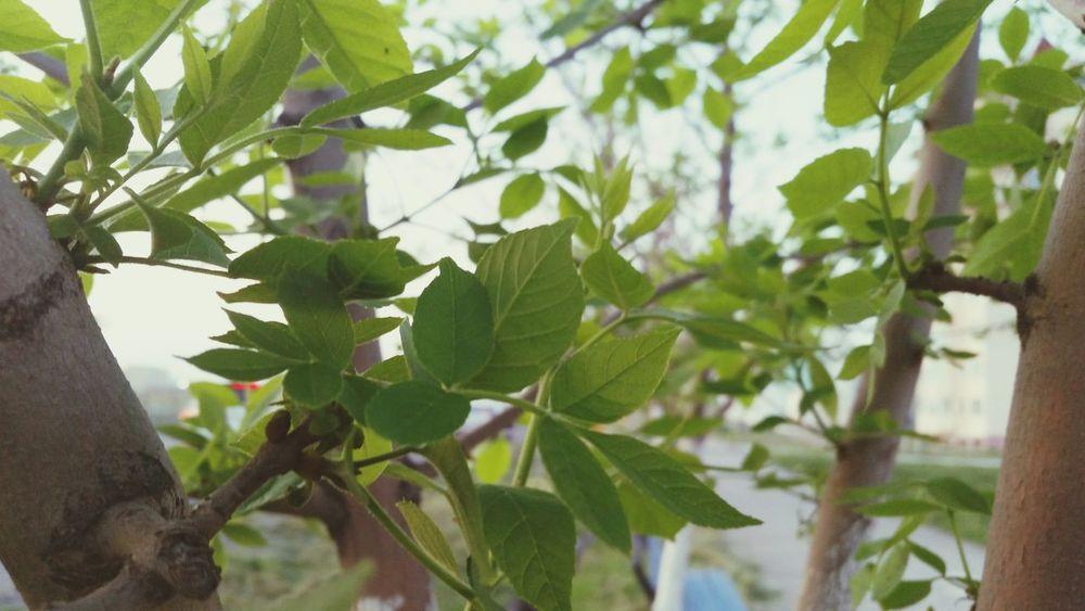 деревья листья Природа Тараз