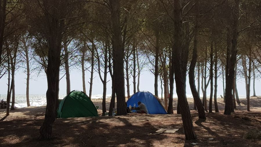 People camping by tent amidst trees on field